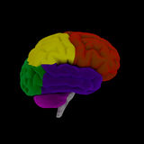Brain-cerebrum Royalty Free Stock Image
