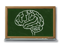 Brain chart diagram on a blackboard Stock Photography