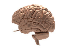 Brain with clipping mask Royalty Free Stock Photos