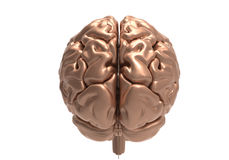 Brain with clipping mask. Metallic brain on white background with clipping mask Royalty Free Stock Images