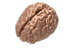 Brain with clipping mask. Metallic brain on white background with clipping mask Royalty Free Stock Photography