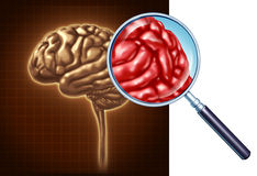 Brain Close Up Royalty Free Stock Images