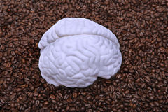 Brain on coffee beans stock photography