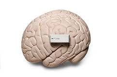 Brain with computer keys Stock Photography