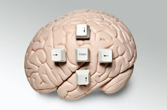 Brain with computer keys Stock Image