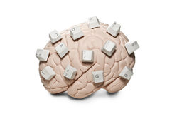 Brain with computer keys Royalty Free Stock Photography