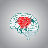 Brain with convolutions associated to the knot, the concept of the recovery of the brain, memory, stroke. The restoration of normal activities of the brain Royalty Free Stock Photos