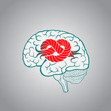 Brain with convolutions associated to the knot Royalty Free Stock Photos