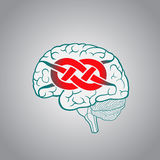 Brain with convolutions associated to the knot Royalty Free Stock Photography