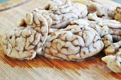Brains  Royalty Free Stock Photo
