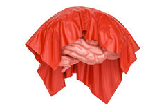 Brain covered red cloth, presentation concept. 3D rendering Royalty Free Stock Images