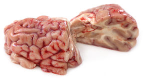 Brain of a cow Stock Images
