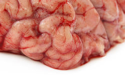 Brain of a cow Royalty Free Stock Image