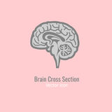 Brain cross section. Icon in grey colour. Vector illustration in flat style isolated on a light pink background. Minimalistic modern concept Stock Photos