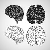 Brain design. organ icon. Flat illustration,  graphic Royalty Free Stock Image