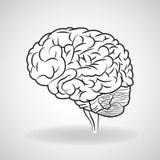 Brain design. organ icon. Flat illustration,  graphic Stock Images
