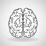 Brain design. organ icon. Flat illustration,  graphic Royalty Free Stock Photos