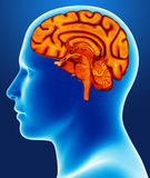 Brain detail. An illustration of a human brain stock illustration