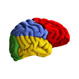 Brain Diagram Stock Images