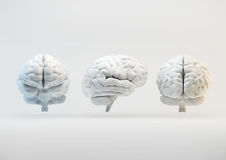 Brain from different angles Royalty Free Stock Image