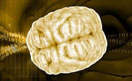Brain. Digital illustration of brain in colour background royalty free stock photos