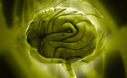 Brain. Digital illustration of brain in colour background royalty free illustration