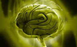 Brain Royalty Free Stock Photo