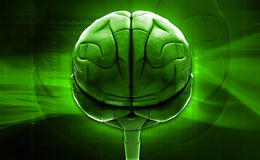 Brain Royalty Free Stock Photography
