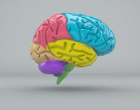 Brain division organ structure Stock Photography