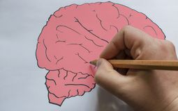 The brain is drawn on paper with a pencil. stock image