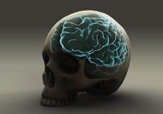 Brain Within el cráneo Imagen de archivo libre de regalías