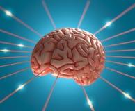 Brain Energy Stock Image