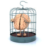 Brain escape from the birdcage Stock Photos