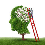 Brain Exam. Brain and memory medical exam with a doctor on a red ladder climbing high to inspect a human head shaped tree as a symbol of dementia disease Royalty Free Stock Image