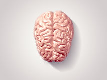 Brain faceted. Illustration of human brain with faceted low-poly geometry effect Stock Photos