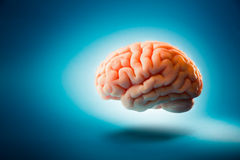 Brain floating on  a blue background / selective focus. Human brain floating on a blue background Stock Photo