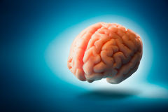 Brain floating on  a blue background / selective focus Royalty Free Stock Image