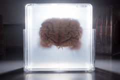 Brain floating in a glowing jar Royalty Free Stock Photos
