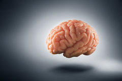 Brain floating on  a grey background / thoughts concept Royalty Free Stock Images