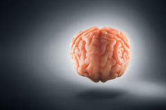 Brain floating on  a grey background / thoughts concept Royalty Free Stock Photos