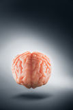 Brain floating on  a grey background / thoughts concept Royalty Free Stock Photography
