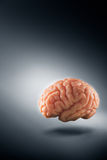 Brain floating on  a grey background / thoughts concept Stock Photography