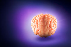 Brain floating on  a purple background / thoughts concept Royalty Free Stock Photo