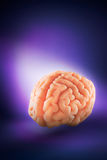 Brain floating on  a purple background / thoughts concept Stock Photos