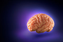 Brain floating on  a purple background / thoughts concept Royalty Free Stock Photos