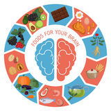 Brain Foods infographics Royaltyfri Foto