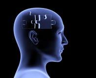Brain Royalty Free Stock Photos