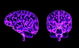 Brain front and side Stock Photo