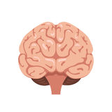 Brain front view icon Stock Photo
