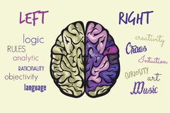 Brain Function Image libre de droits